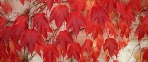 Leaves for website